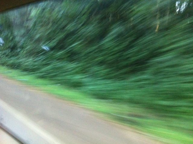 driving-in-mabira-forest